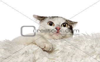 Crossbreed cat leaning on white carpet (1,5 year old)