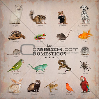 poster of pets in spanich