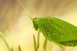 Grasshopper is a list of the grass