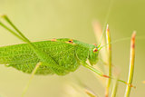 Grasshopper is a list of the grass