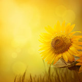 Summer sunflower background