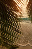 Beautiful view of a tropical beach with palm leaf on sunset