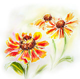 Painted watercolor card with helenium flowers