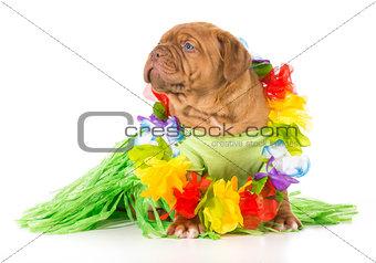 hula dog