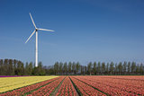 Tulip field and wind turbine