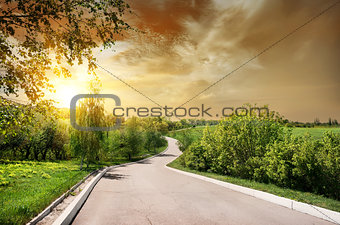 Asphalted road and birches