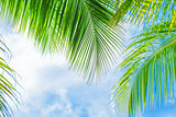Fresh green palm tree foliage