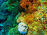 Underwater coral background
