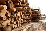 heap  log
