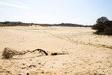 Sand landscape, National Park Zuid Kennemerland, The Netherlands