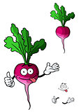 Cute fresh leafy radish vegetable
