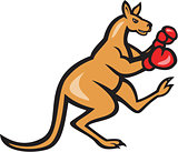 Kangaroo Kick Boxer Boxing Cartoon