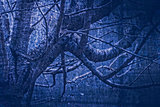 artwork in painting style gloomy wood in dark blue tones