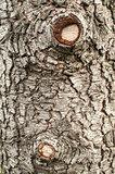 Old cedar tree bark closeup