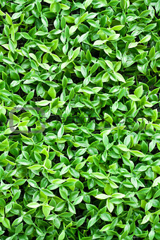artificial tiny green leaves texture