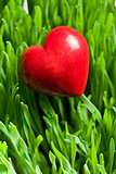 red heart on green lawn