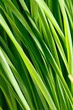 pattern of green grass