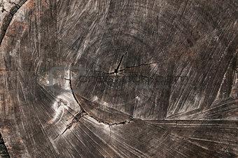 Weathered walnut log