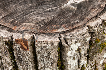 Walnut weathered log