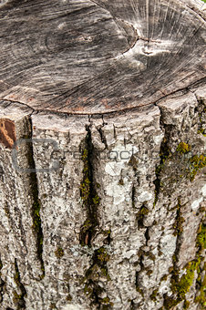 Walnut weathered log detail