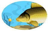 Common carp catching bait