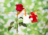 Red roses, present and name card on clothesline