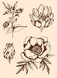 Vintage hand drawn flowers