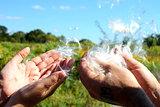 Milkweed Wish