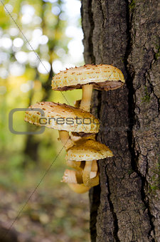 A group of mushrooms on a tree trunk