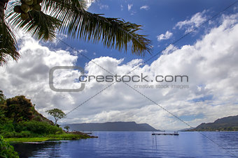 Branch of Palm Tree and Lake.