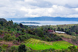 View to Rice Terraces.