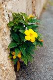 yellow flower on stone