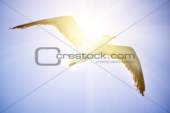 A cormorantl flies in the clear blue sky.