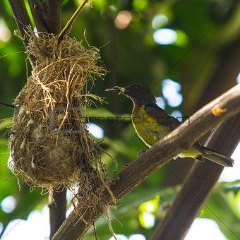 Bird (Olive-backed Sunbird)