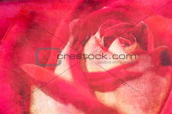 A vintage Grunge paper background with bright red rose