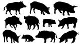 pig silhouettes