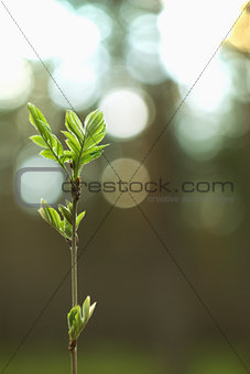Small tree against the sun