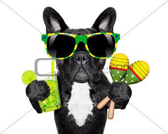 brazilian french bulldog
