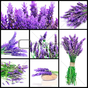 lavender flowers collage