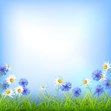Field flowers daisy cornflower grass background