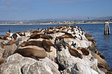Sea lions in Monterey, California, USA