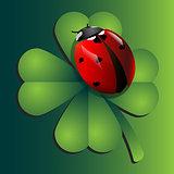 Ladybug on clover