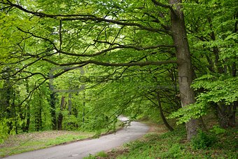 Road in Green Forest