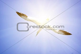 A Albatros flies in the clear blue sky.