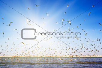 A large number of seagulls flying over the sea surface.