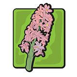 hyacinth clip art