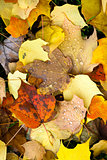 Leaves Fallen Winter Nature Ground Autumn Season Change Dew Drop