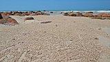 sand bubbler crab balls on the beach