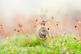 Snails and moss