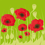 poppy flowers on green background